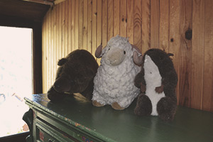 Marmotte Farfelus